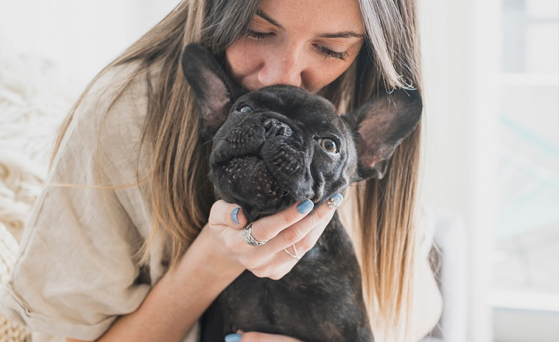 Essential French dogs care that every owner should have