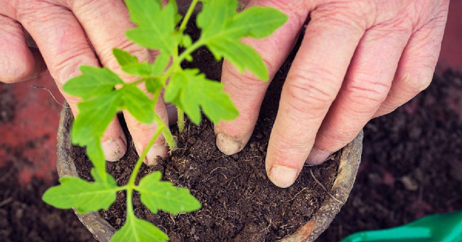 7 Secret Health Benefits of Gardening