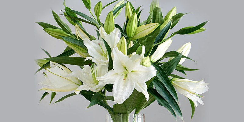 What Is So Special About A Lily?